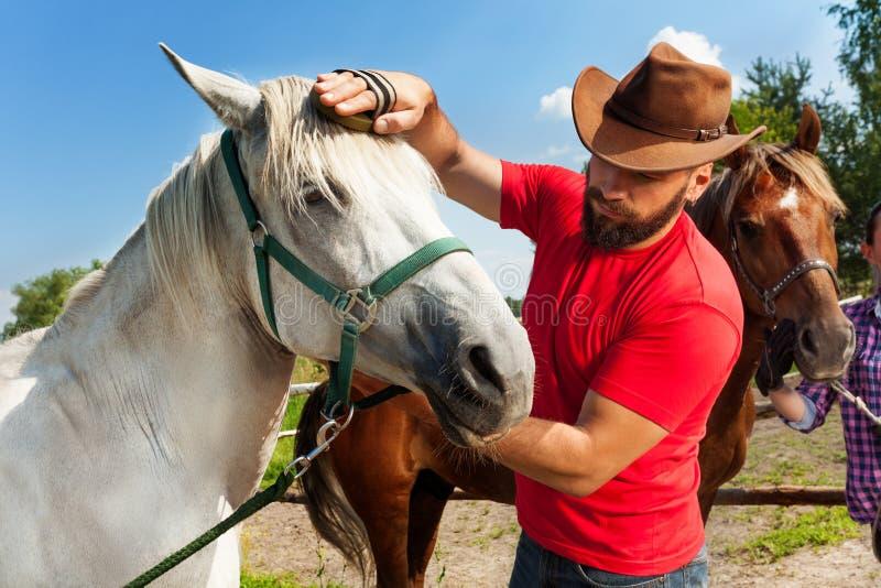 Homme dans le chapeau de cowboy toilettant la crinière de son cheval photos libres de droits