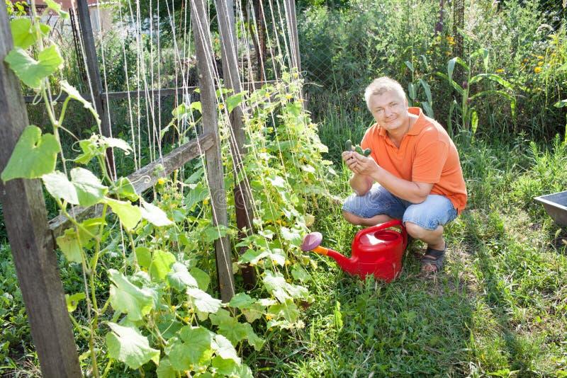 Homme dans le jardin photo libre de droits