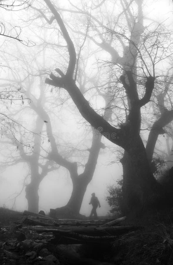 Homme dans une forêt brumeuse mystérieuse photos libres de droits
