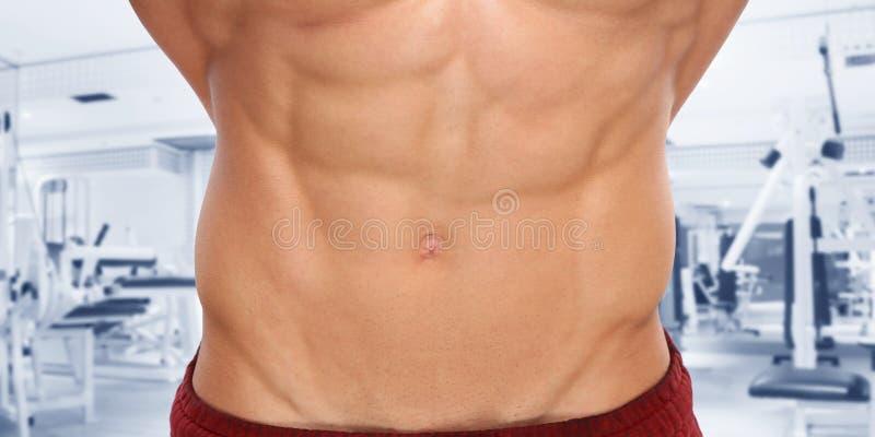 Homme de bodybuilding de bodybuilder de gymnase d'estomac de muscles abdominaux d'ABS photos stock