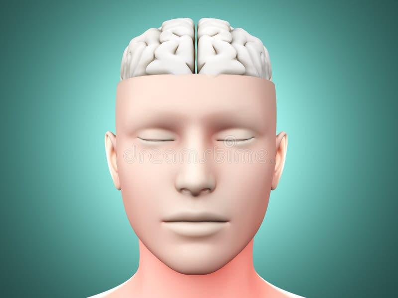 Homme de cerveau illustration de vecteur
