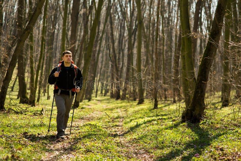 Homme en bonne santé actif trimardant dans la belle forêt image libre de droits