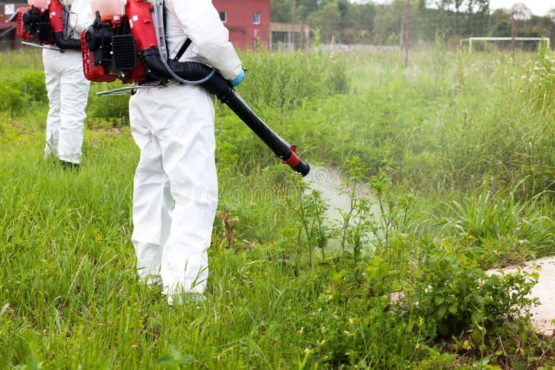 Homme en herbicide de pulvérisation de vêtements de travail protecteurs sur le ragweed dans une zone urbaine lutte contre les mau image stock