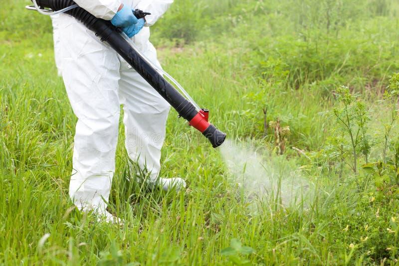 Homme en herbicide de pulvérisation de vêtements de travail protecteurs sur le ragweed lutte contre les mauvaises herbes image stock