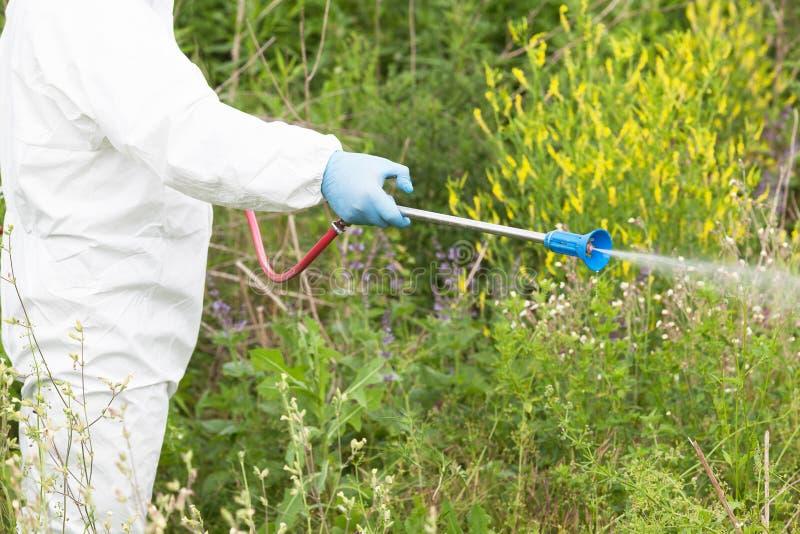Homme en herbicide de pulvérisation de vêtements de travail protecteurs sur le ragweed lutte contre les mauvaises herbes images libres de droits