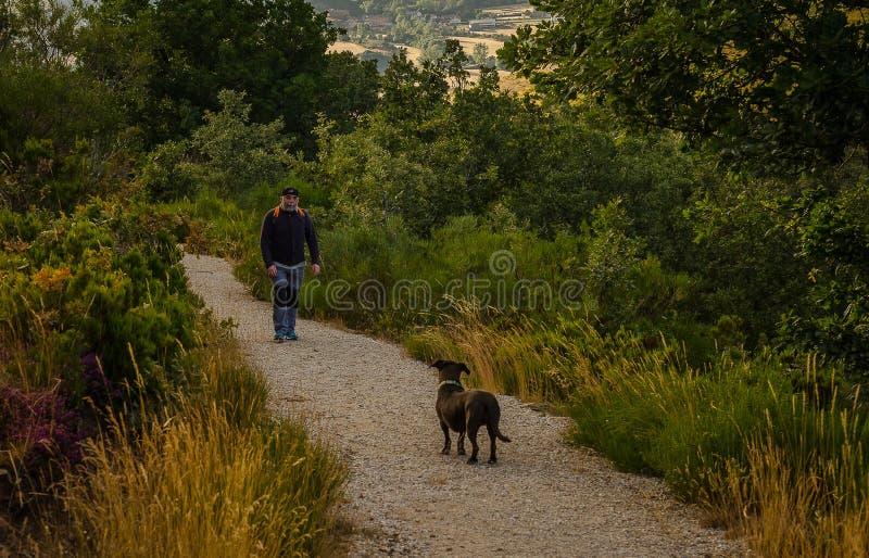 Homme et chien sur le chemin de la for?t fossile de Verdeña Palencia photographie stock libre de droits