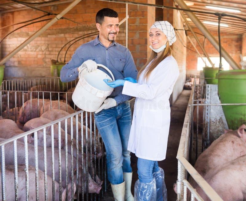 Homme et femme avec l'alimentation pour des animaux de ferme images libres de droits
