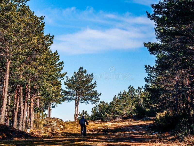 Homme faisant un cycle dans la forêt photographie stock