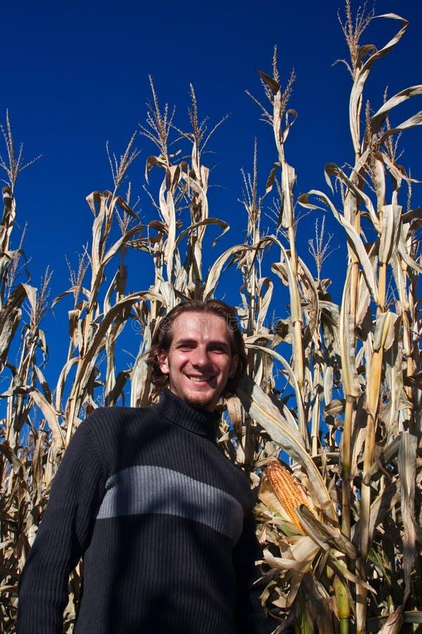 Homme marchant à travers la zone de maïs images stock