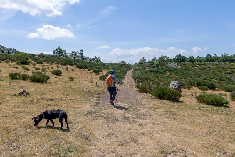 Homme marchant avec son chien dans les montagnes de Palencia images stock