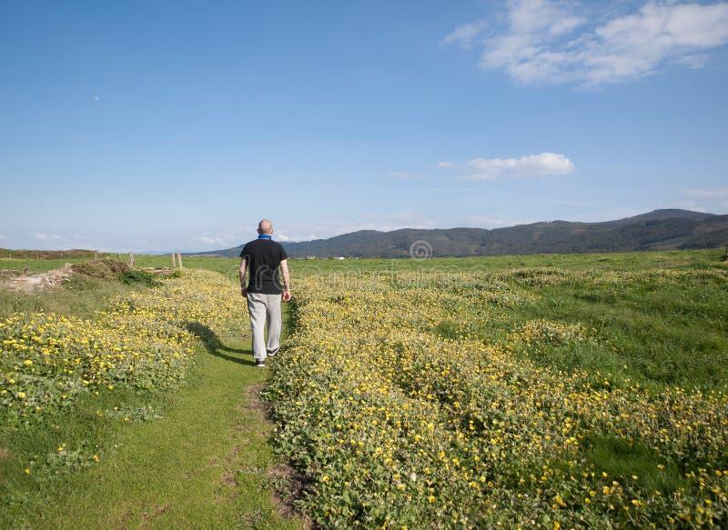 Homme marchant dans un chemin au milieu du pré photographie stock libre de droits