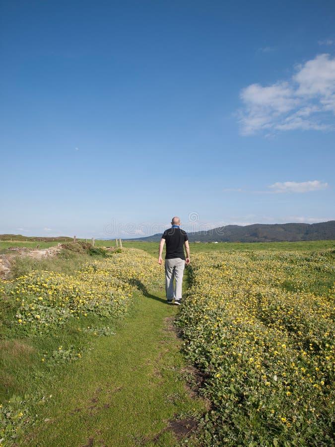 Homme marchant dans un chemin au milieu du pré photos libres de droits