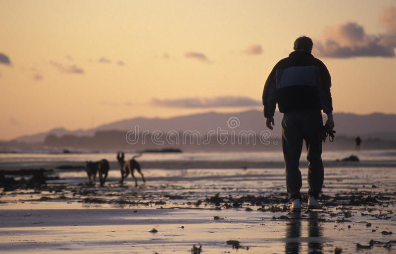 Homme marchant les chiens sur une plage au coucher du soleil photo stock
