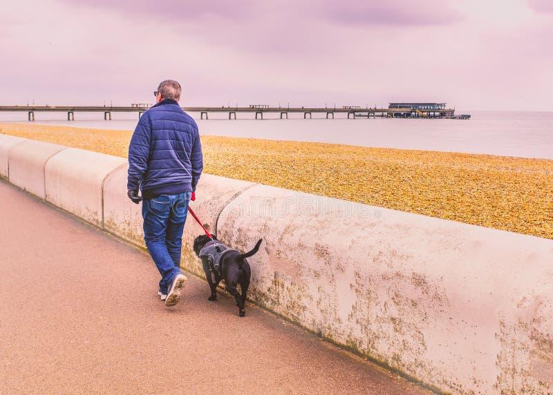Homme marchant un chien avec un harnais leashed lu le long de la promenade en hiver au bord de mer dans l'affaire, Kent, R-U photographie stock libre de droits