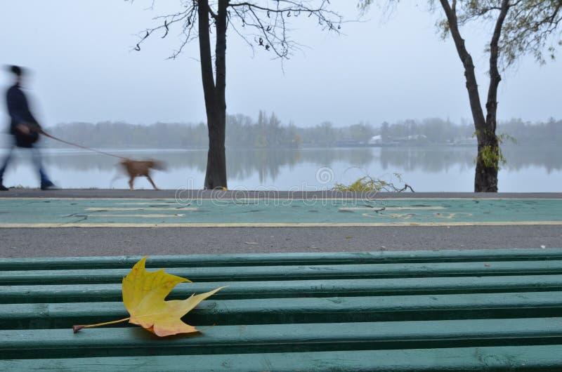 Homme marchant un chien près du lac en parc image stock