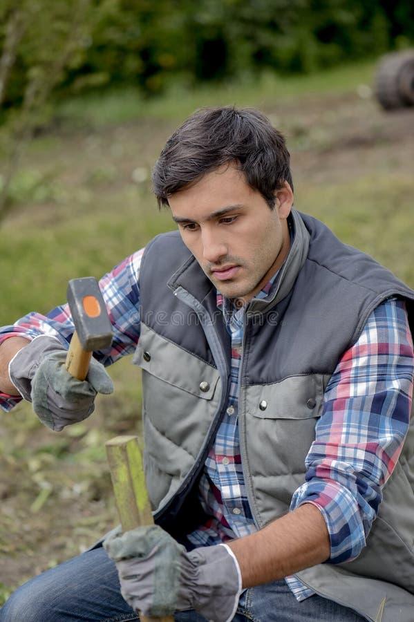 Homme martelant l'enjeu en bois dans la terre photographie stock