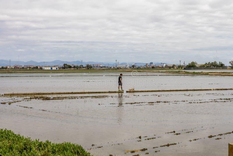 Homme observant les gisements de riz près de Valence images libres de droits