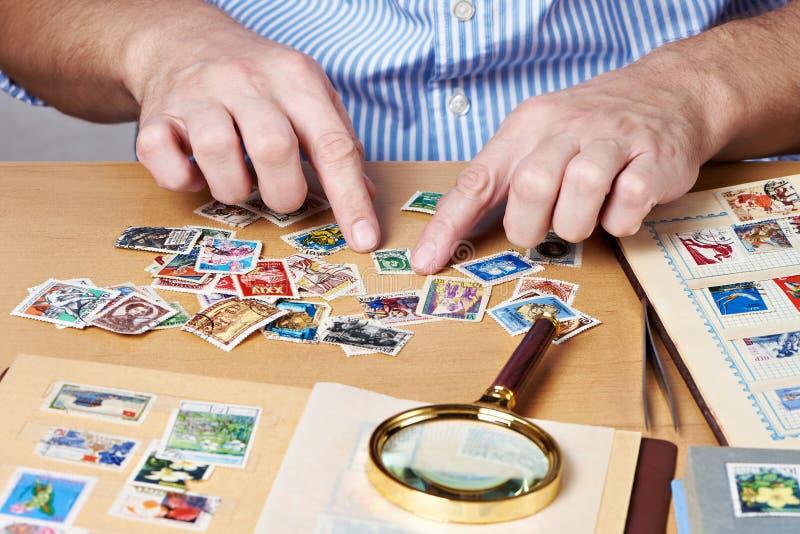 Homme observant une collection de timbres-poste images stock