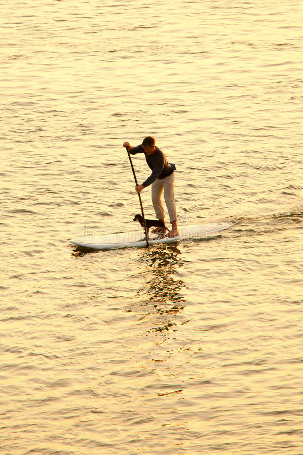Homme paddleboarding avec le chien image stock