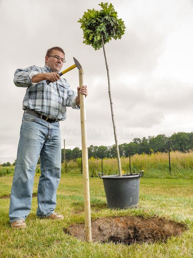 Homme plantant l'arbre photos stock