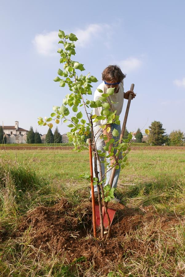 Homme plantant un nouvel arbre photographie stock