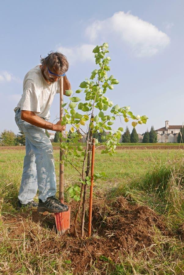 Homme plantant un nouvel arbre photos libres de droits