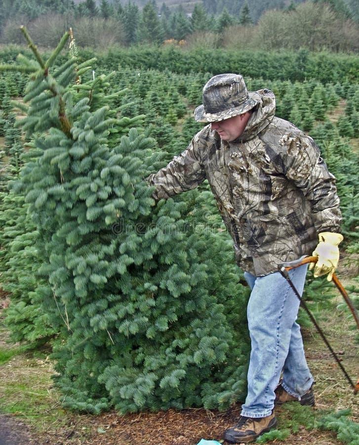 Homme réduisant un arbre de Noël photos stock