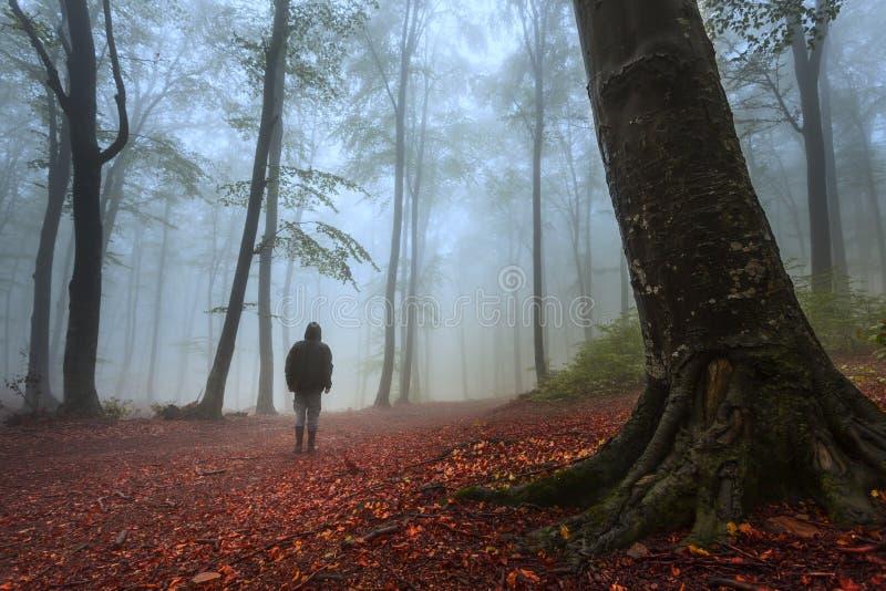 Homme rampant dans la forêt brumeuse photos libres de droits
