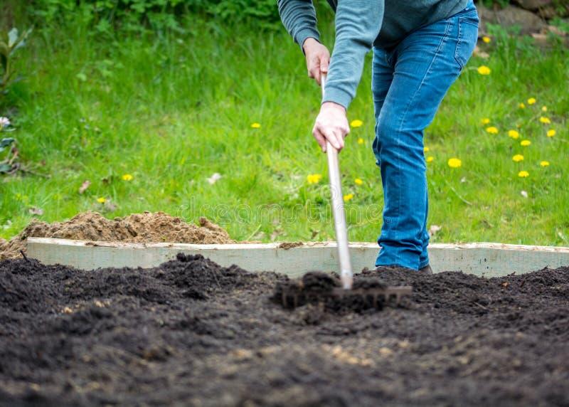 Homme ratissant le sol dans un jardin photos libres de droits