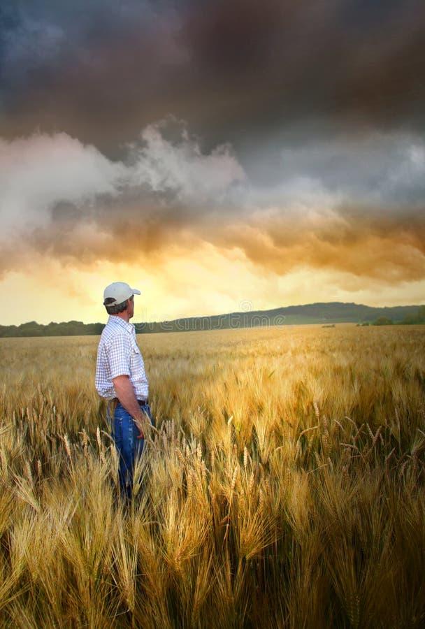 Homme restant dans un wheatfield photo stock