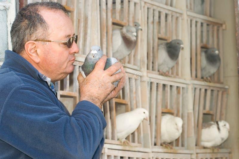 Homme retenant un pigeon image libre de droits