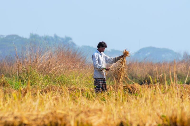 Homme rural indien travaillant dans le domaine photographie stock libre de droits