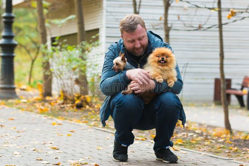 Homme sérieux avec pomeranian et terrier en parc d'automne photos libres de droits