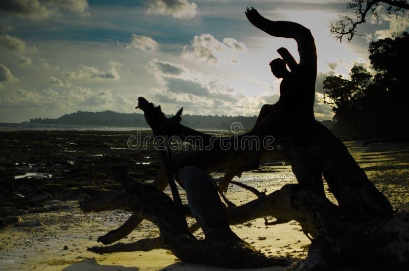 Homme s'asseyant sur un arbre tombé ou des bois sur une plage photographie stock libre de droits