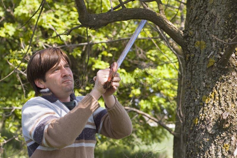 Homme sciant un branchement avec un handsaw photos libres de droits