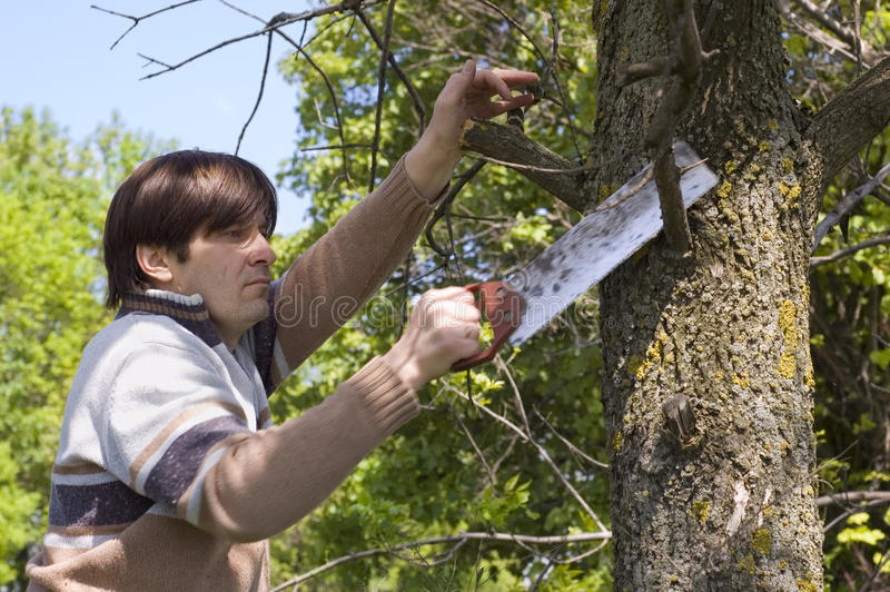 Homme sciant un branchement avec un handsaw photographie stock
