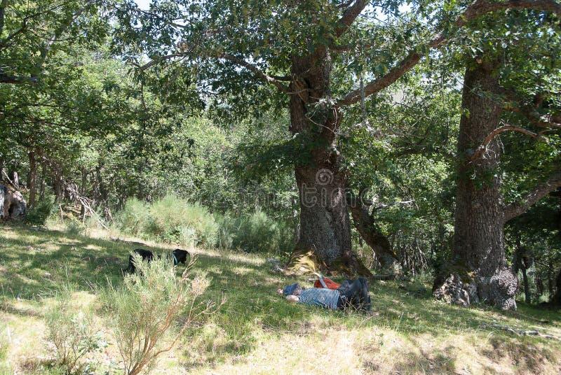 Homme se reposant avec son chien dans les montagnes de Palencia photos stock