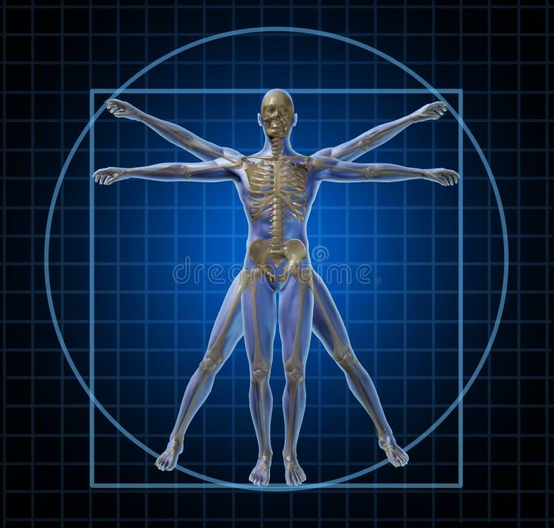 Homme squelettique humain de Vitruvian illustration stock