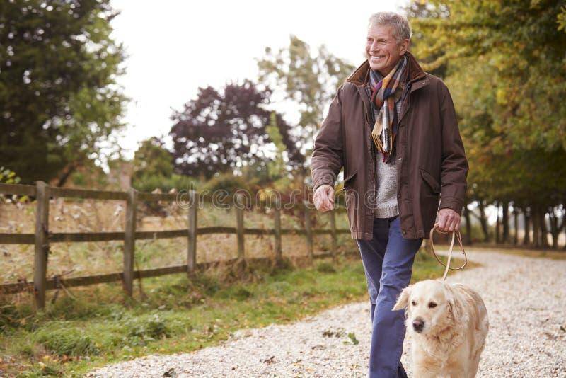 Homme supérieur actif sur le chemin d'Autumn Walk With Dog On à travers la campagne images libres de droits