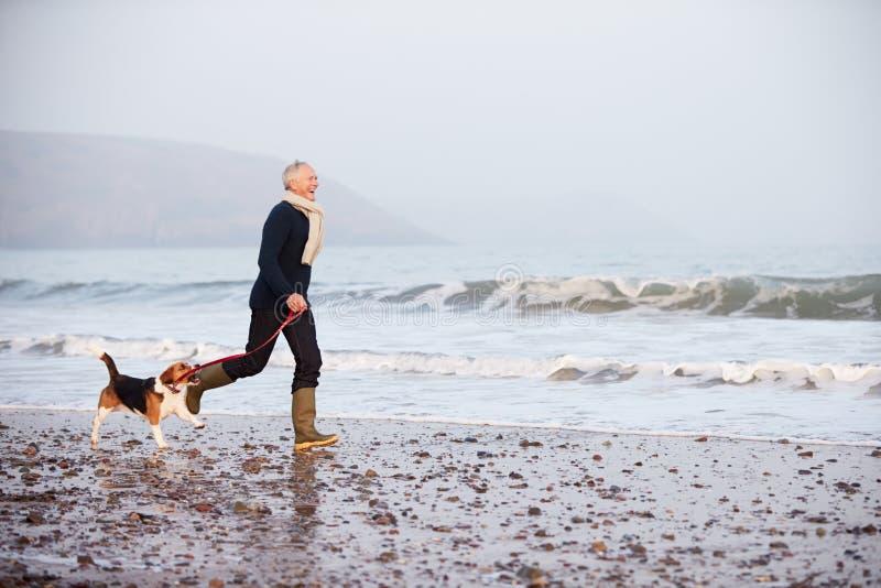 Homme supérieur marchant le long de la plage d'hiver avec le chien photographie stock libre de droits