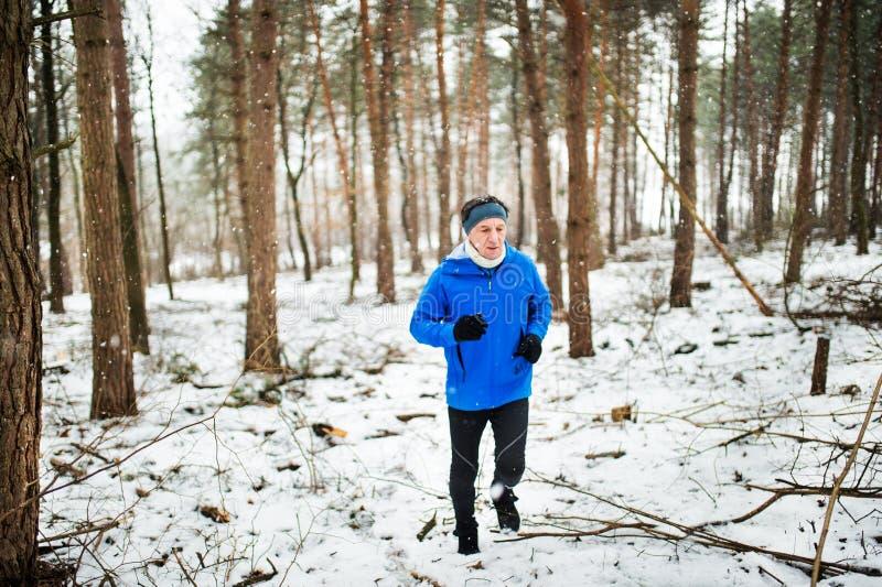 Homme supérieur pulsant dans la région boisée en nature d'hiver image libre de droits