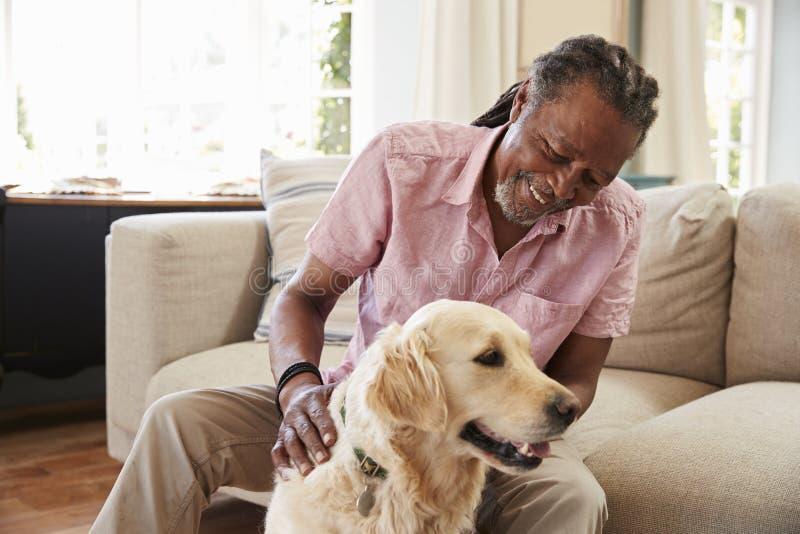 Homme supérieur s'asseyant sur le chien de Sofa At Home With Pet Labrador photo libre de droits