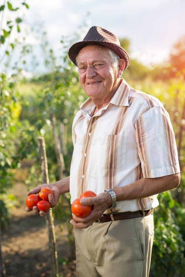 Homme supérieur tenant des tomates image libre de droits