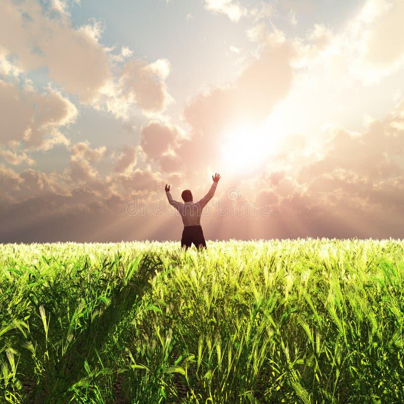 Homme sur la zone de blé au lever de soleil photographie stock