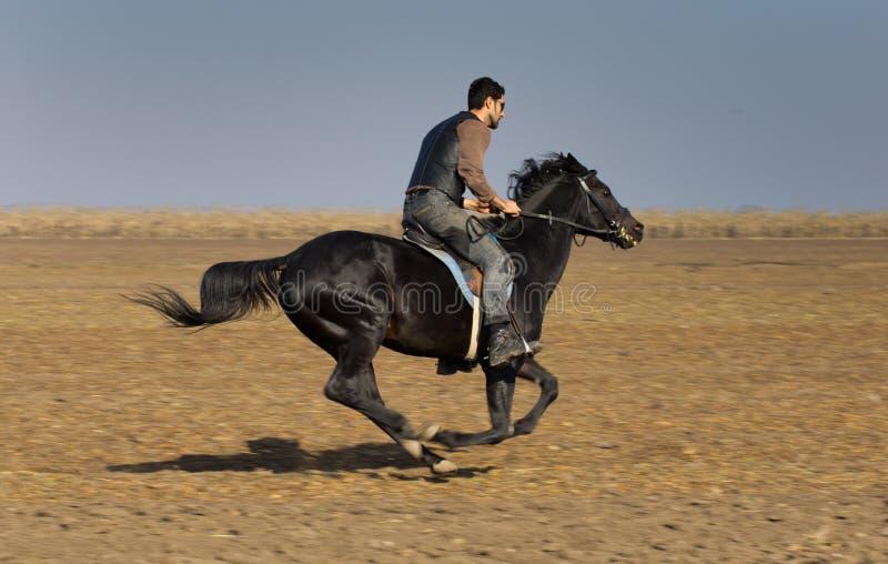 Homme sur le cheval photographie stock libre de droits
