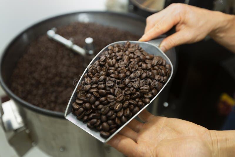 Homme tenant des grains de café dans des deux mains, vérifiant la qualité après RO image libre de droits