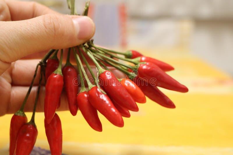 Homme tenant la fin d'un rouge ardent de poivre de piments  photos libres de droits