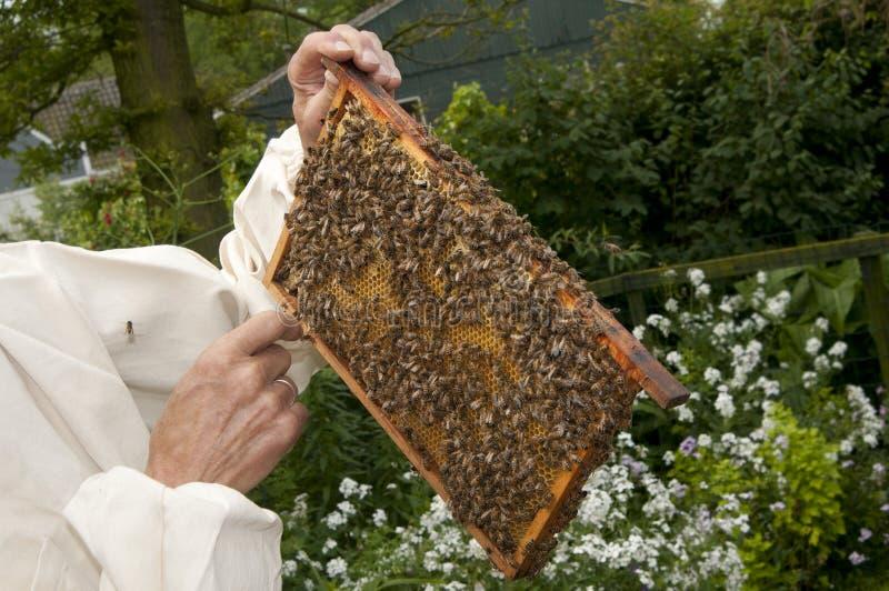 Homme tenant le nid d'abeilles image libre de droits
