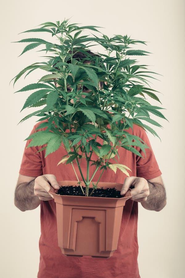 Homme tenant le pot de cannabis image stock