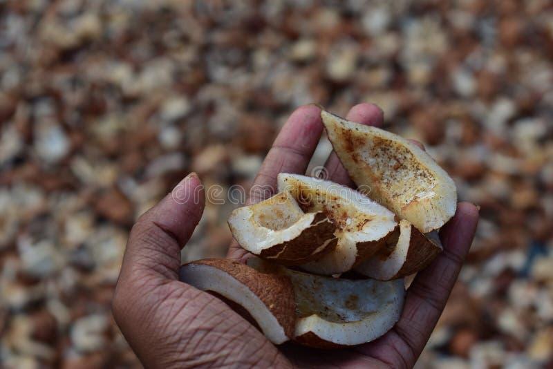 Homme tenant les morceaux secs de noix de coco images libres de droits
